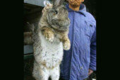 Obama Captures Large Rabbit (Article)